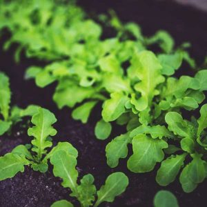 Home Hydroponics 100 Hours Course - ADL - Academy for Distance Learning