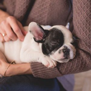 Pet Care 100 Hours Certificate Course - ADL - Academy for Distance Learning