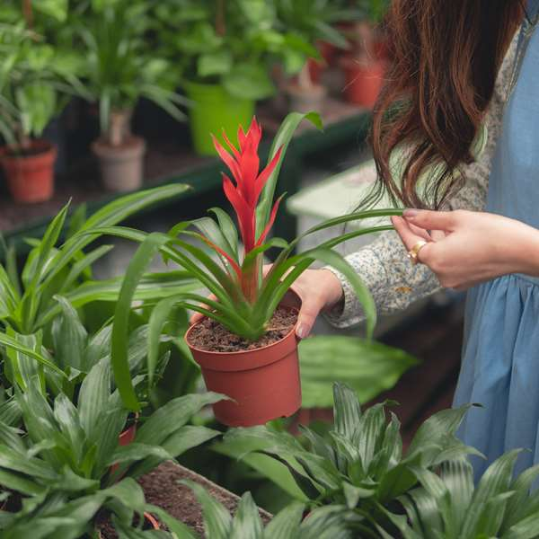 Horticultural Research I 100 Hours Certificate Course - ADL - Academy for Distance Learning