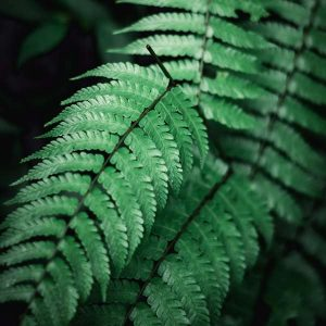 Tropical Plants 100 Hour Certificate Course  - ADL - Academy for Distance Learning