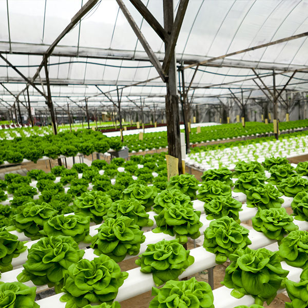 commercial-hydroponics