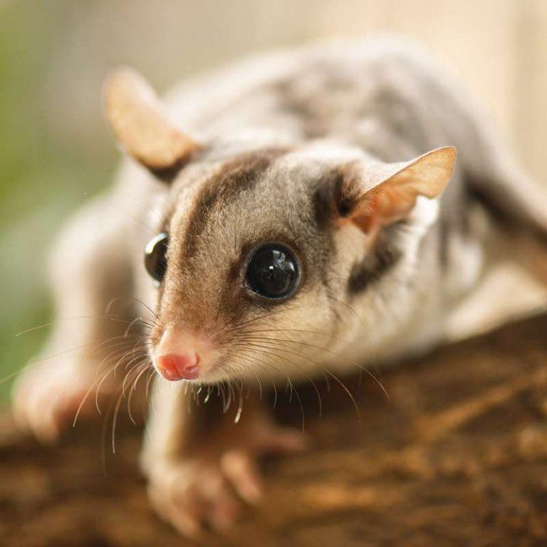 Marsupials Courses - Learn Online