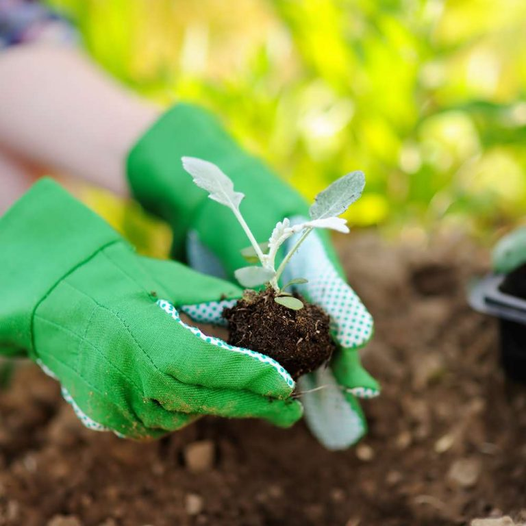 horticulture-online-courses (2)